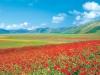 fioritura_pian_grande